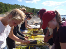 Students tie eelgrass to grids